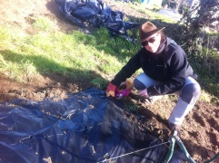 Plantando patatas